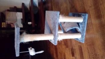 Kraapimispuu kassile
