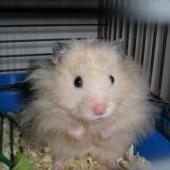 Hamster (koos varustusega)