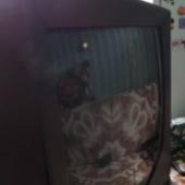 Televiisor Panasonic