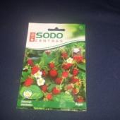 Metsmaasikas- seemned!