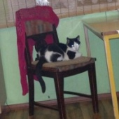 7 kuune isane kass
