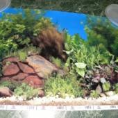 Pilt akvaariumi tagaküljele