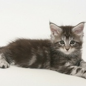 Soovin emast kassipoega