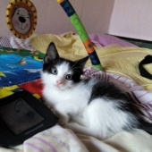 Isane kassipoeg