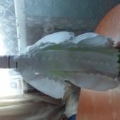 Pudeli kaunistus PRUUT