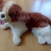 Lamav koer